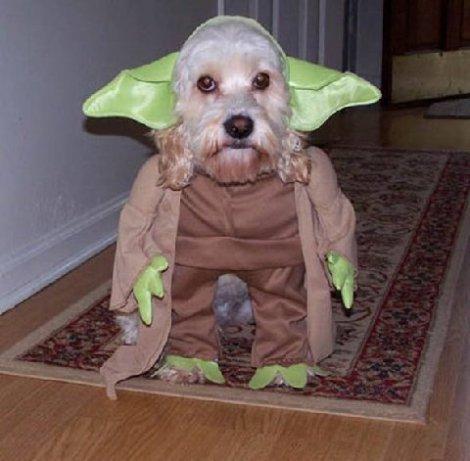 puppy-yoda.jpg